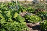 Formación para el profesorado en la Comunitat Valenciana sobre huerto escolar y soberanía alimentaria
