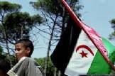 """Documental: """"*Fusells o *pintades, la *lluita no violenta del *Poble *Sahrauí""""."""