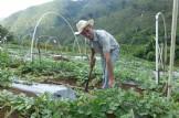 Alimentación. ¿Un deseo o un derecho?  Una experiencia sobre seguridad alimentaria en el occidente de Honduras