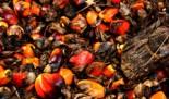 Uno de dos, El aceite de palma en tu vida diaria