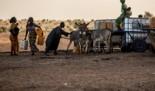 900 000 PERSONAS AFRONTAN UNA INMINENTE CRISIS ALIMENTARIA EN LA FRONTERA MAURITANIA-SENEGAL