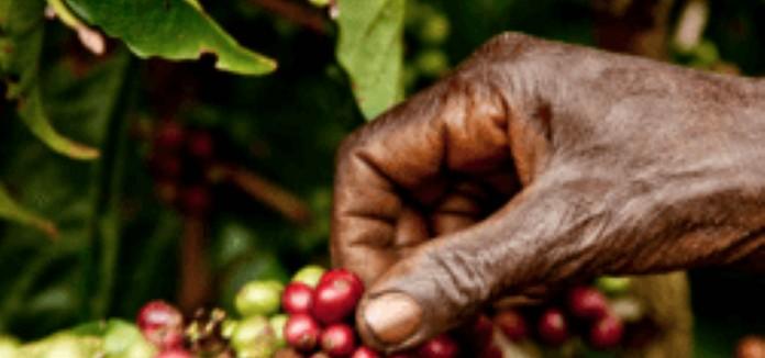 El Comercio Justo garantiza ingresos dignos para las organizaciones productoras de cacao y café