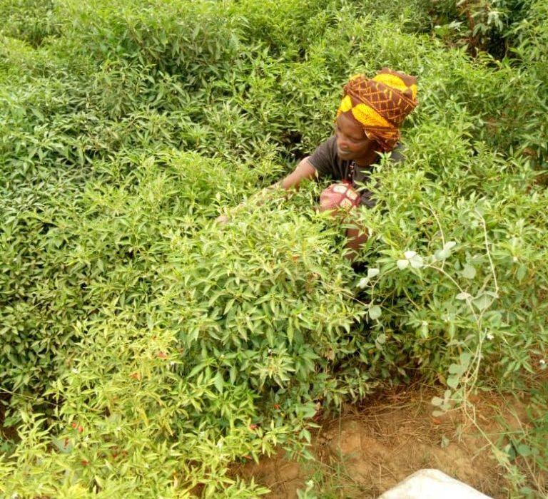 Mujer Senegal